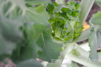 interior-view-of-broccoli-at-july-3