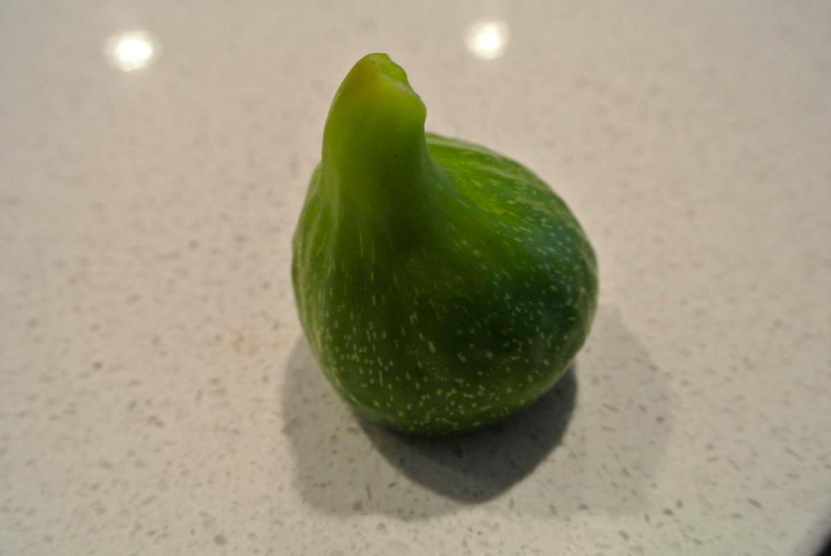 A Lone Fig